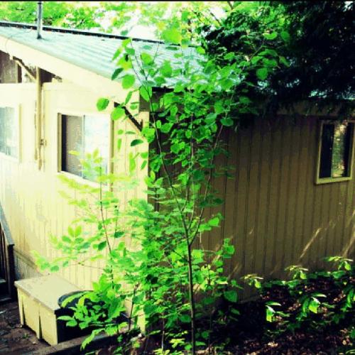 Cottage Exterior Photo